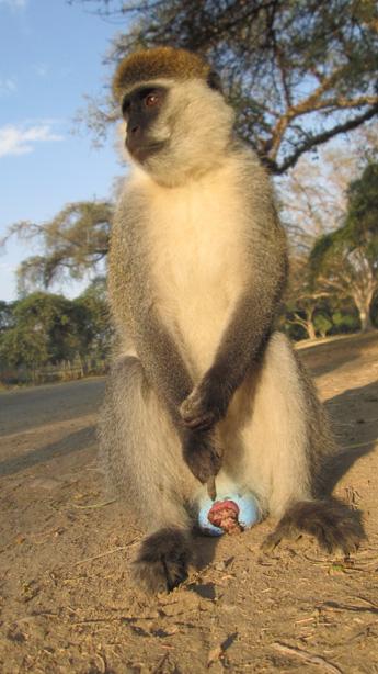 monkeyIMG_4057