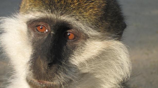 monkeyocchi3IMG_4060