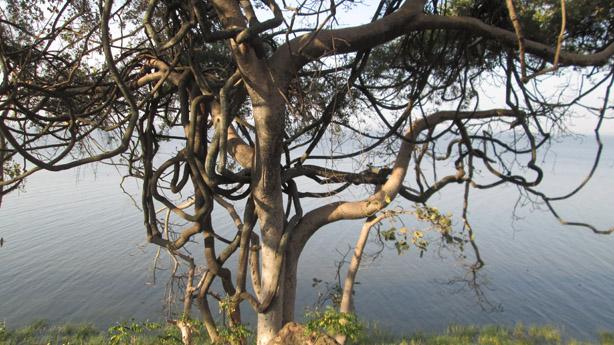treeIMG_4077