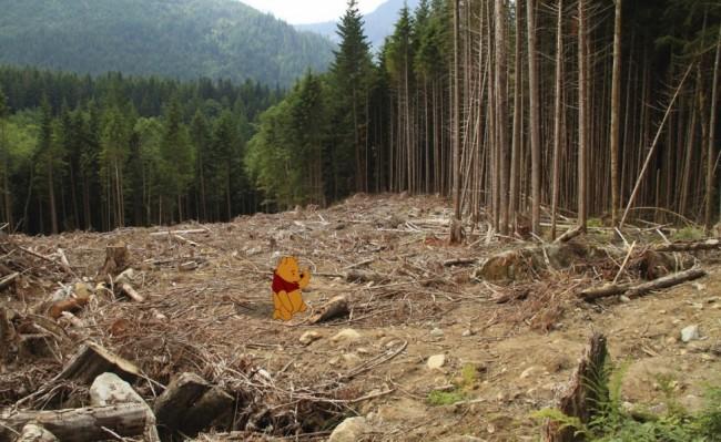 Winnie the Pooh e il disboscamento